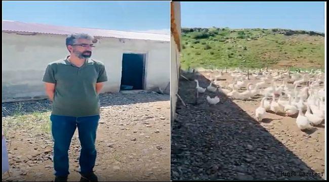 Hınıs'ta Kurulan Kaz Çiftliği Göz Kamaştırıyor